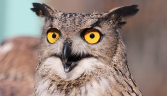 Dominate Twitter with Hootsuite