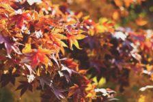 Listing Videos Autumn Edition