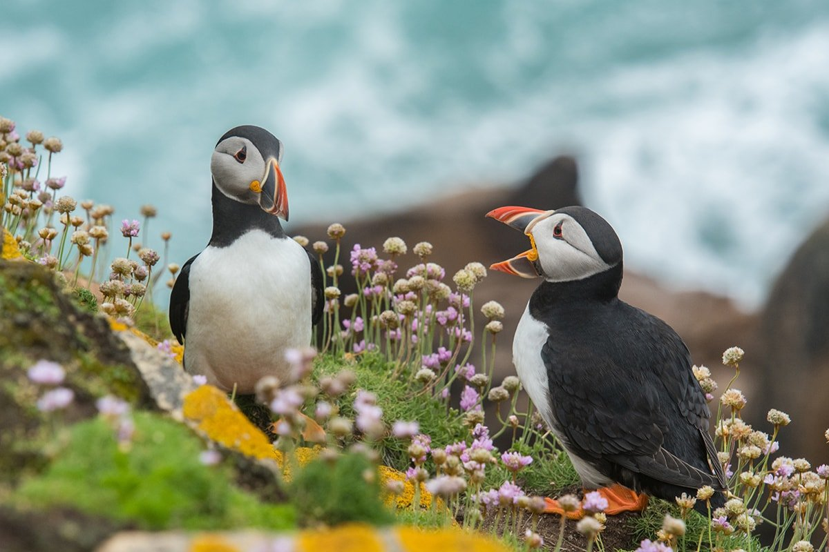 Puffins giving feedback
