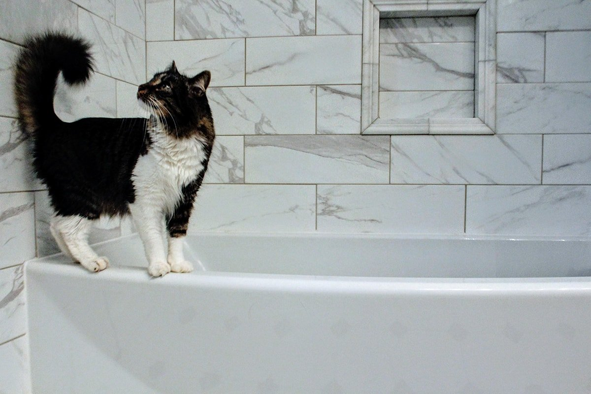 Cat thinking about fixing the grout