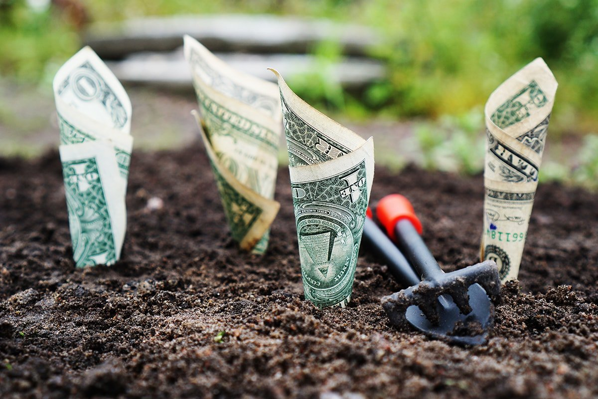 Dollar bills planted in the ground to grow like with interest