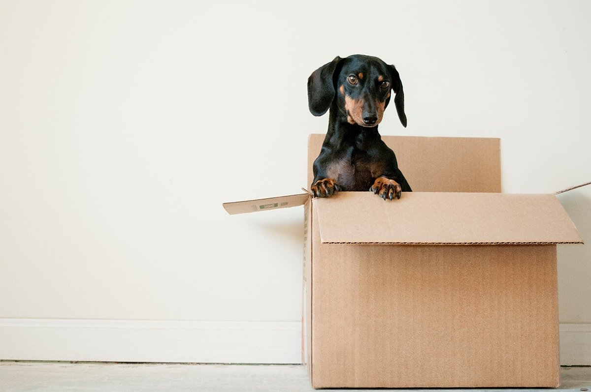 Dog in a box on moving day