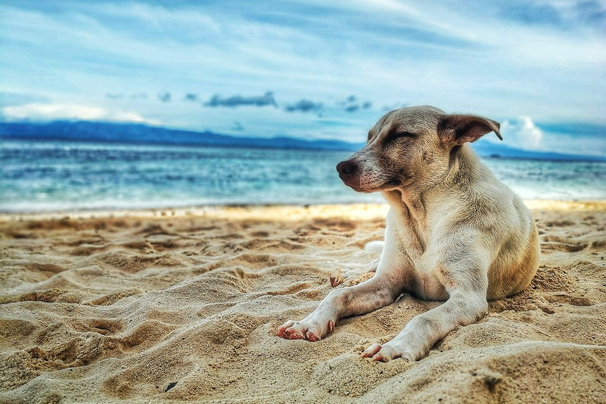Dog on vacation on a beach